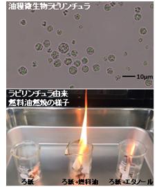 株式会社Biomaterial in Tokyo